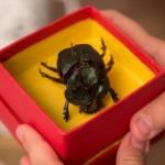 4 livros da série Vaga-Lume que poderiam virar filme (assim como Escaravelho do Diabo)