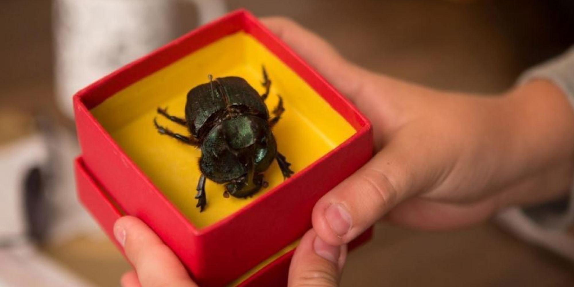 escaravelho do diabo